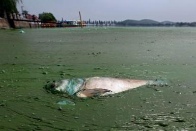 Эта рыба была последней в реке
