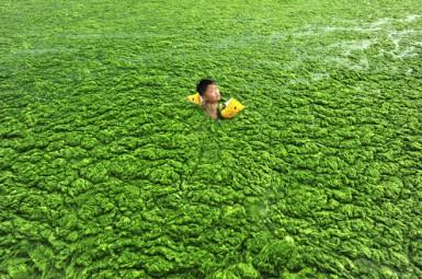 Китай - хорошо удобренная вода