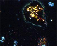 Бактерии в воде