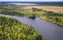 Вода и лес