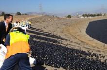 Мэр Лос-Анджелеса Eric Garcetti запускает защитные шары на воду