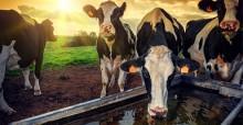 Потребления мяса способствует усилению дефицита воды