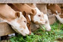 Люцерна и пастбища для скота употребляют львиную долю водных ресурсов