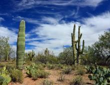 Клейковина кактуса является активным диспергатором нефти